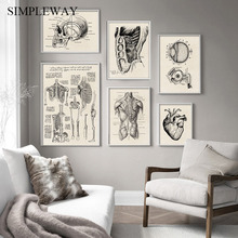 Human Anatomy Artwork Medical Wall Picture Muscle Skeleton Vintage Poster Nordic Canvas Print Education Painting Modern Decor