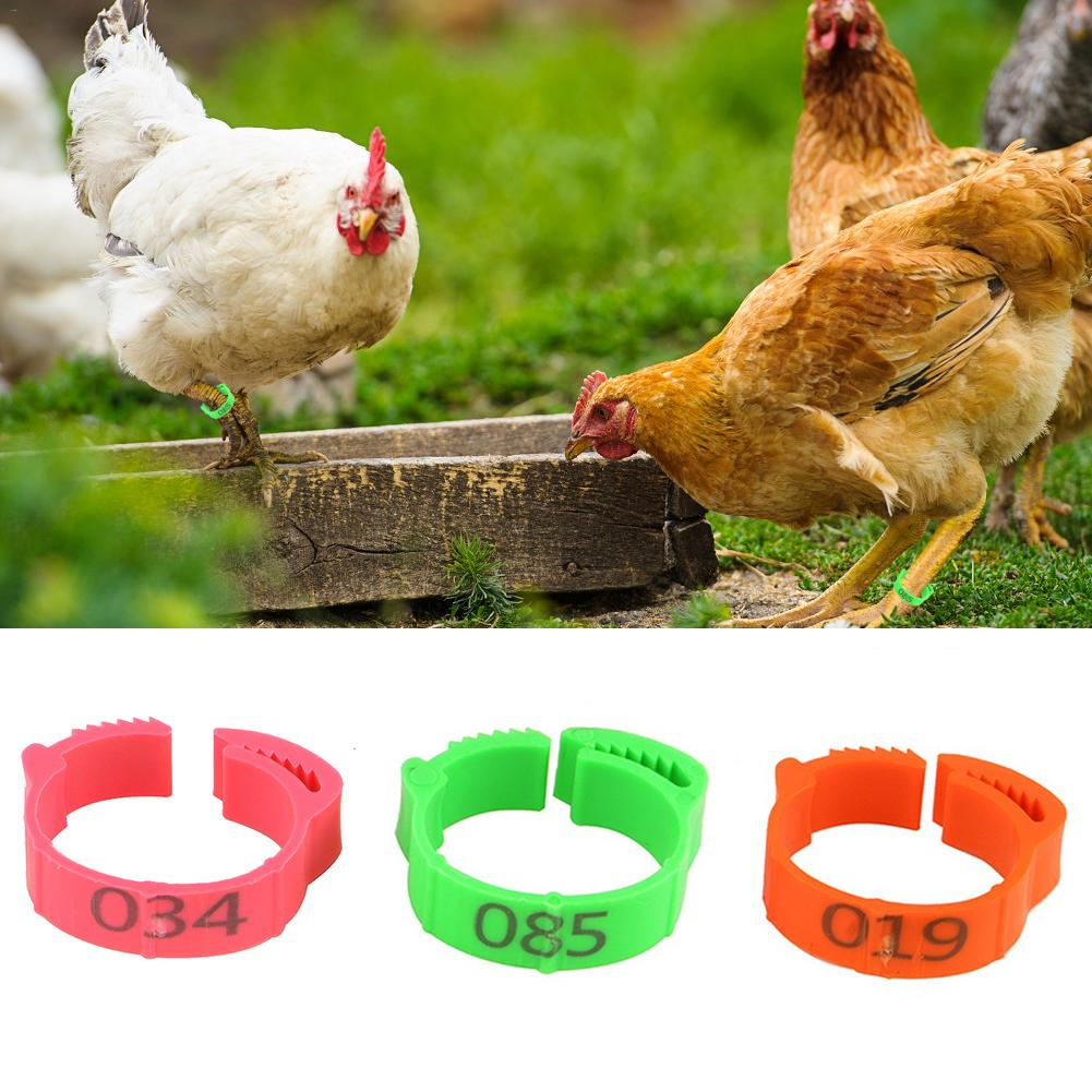 100Pcs Chicken Leg Ring Adjustable Size Poultry Buckle Digital Label For Duck Pigeon Supplies