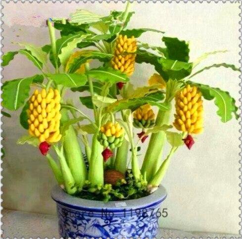 100 Pcs Rare Red Banana Bonsai, Organic Heirloom Delicious Fruit Bonsai Plant For Home, Garden, Balcony,Yard, Easy To Grow