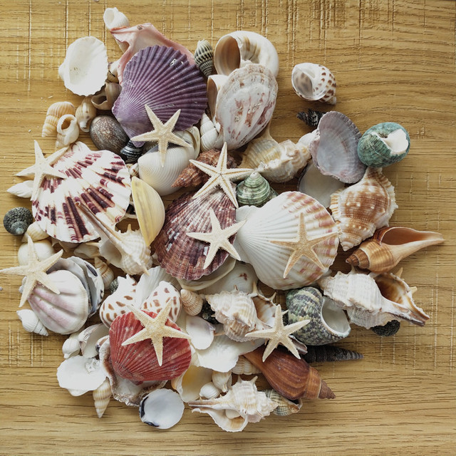 100PCS Mixed Ocean Sea shells Wedding Decor Beach Theme Party, Seashells Home Decorations, Fish Tank, sea star 2