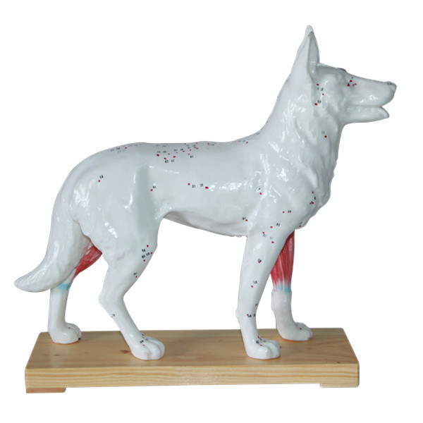 Dog Acupuncture Point Model Animal Acupuncture Models For Veterinarian's Reference Dog Anatomical Model Medical Teaching Models