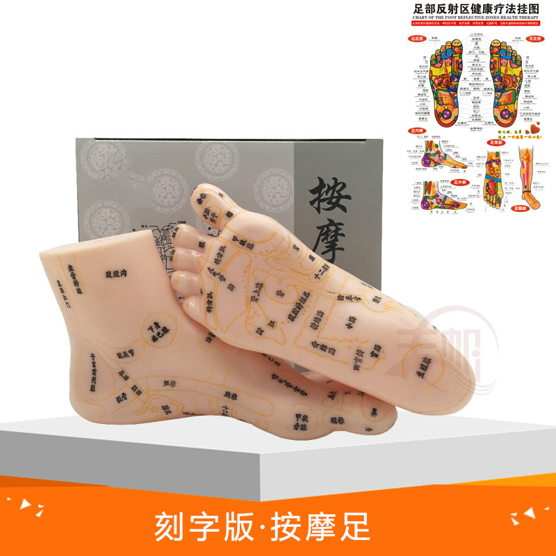 19cm Foot Reflex Zone Massage Model, Not Acupuncture Model, Foot Massage Model Chinese Language Feet Reflexology,1 Pair Medical