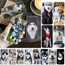 LJHYDFCNB Animal Wolf Husky Dog TPU Soft Rubber Phone Cover for iPhone 11 pro XS MAX 8 7 6 6S Plus X 5 5S SE XR cover(China)