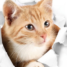 Fridge Sticker Bedroom Kitten Cartoon Wall-Deocration Cat Closestool 3D Cute