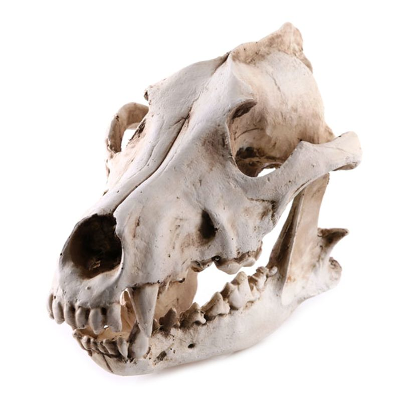 Resin Animal Jackal Coyote Wolf Skeleton Model Teaching Learning Tool Aquarium Decoration Supplies