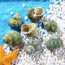 Beach Sea Conch Cowry Cowrie manual Accessories DIY crafts natural Funny shells Decor marine decorative aquarium fittings