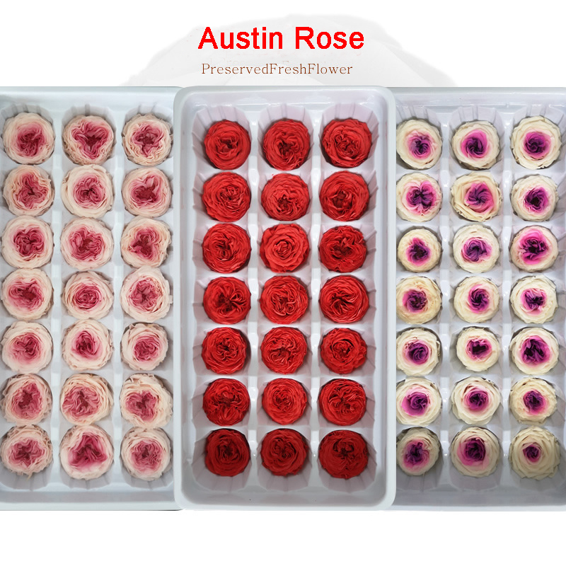 Austin Rose Preserved Flowers Immortal Rose 2-3CM Mothers Day Gift DIY Wedding Eternal Life Flower Material Gift Box Level A