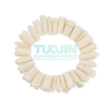 Free Shipping Compatibly Nissin Brand Dental Resin Tooth Model Material Plastic Teeth Teaching Model Dentistry Therapy Product
