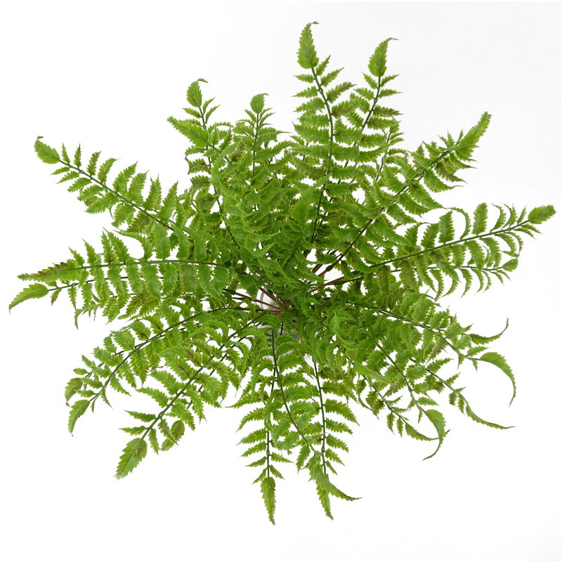 Artificial Green 17 Bunch Venus Fern Leaves Persian Grass Fake Plants Wall Hanging Plastic Leaf Bonsai Home Wedding Decoration