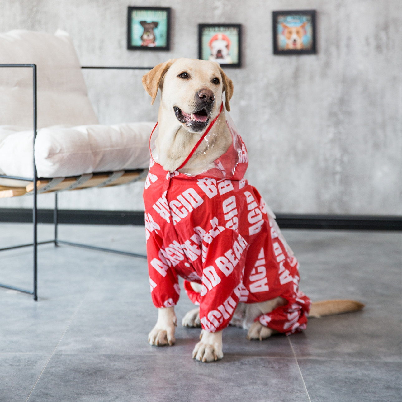 Dog Raincoat Waterproof Letter Fashion Stylish Polyester Best Dog Raincoat For Large Dogs image