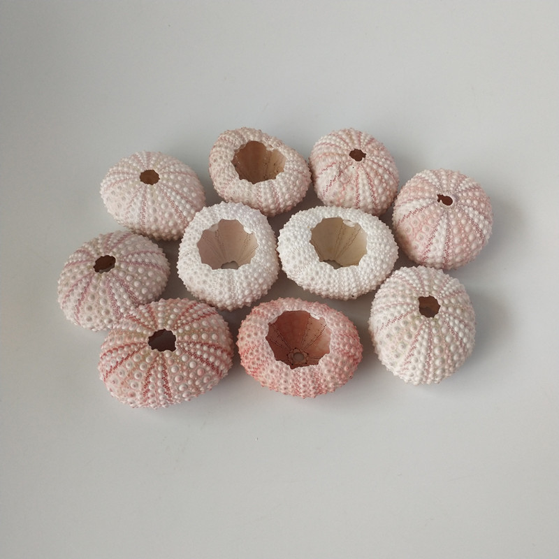 HappyKiss Natural  2pcs  Sea  Urchin  Star Fish Natural Mini Sea Urchins DIY Sea Shells  Small  Pink Sea Shells Weddings