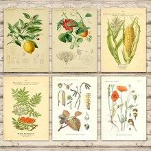 Ilustración de planta de maíz Papaver Lemon Schmiel Encyclopedia lienzo cuadro adhesivo para pared Vintage Kraft poster para guardería decoración del hogar