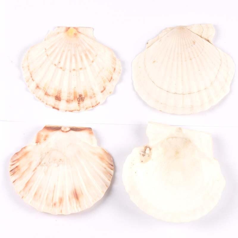 Ракушки морские большого размера 11 см, натуральные морские ракушки, морские ракушки, морские пляжные свадебные украшения, домашний декор, у...