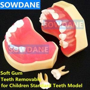 Стоматологическая Учебная модель, стоматологическая ударная стандартная модель, съемные зубы, для взрослых, детей, TYPODONT, модель стоматолог...