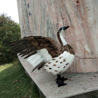 large 35x55cm real life toy duck hard model feathers duck handmade craft handicraft prop,garden garden decoration gift s2287