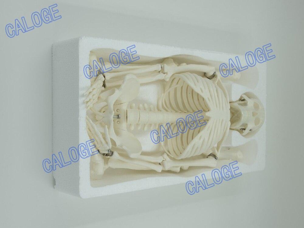 Ofertas especiais estão à venda & 45cm modelo de osso pequeno, modelo esquelético humano, esboço de arte, presente, boneca. modelo humano
