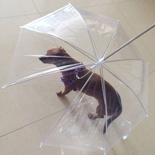 Clothing Dogs New Arrivals Dog Walking Waterproof Clear Umbrella  My Pet World Store