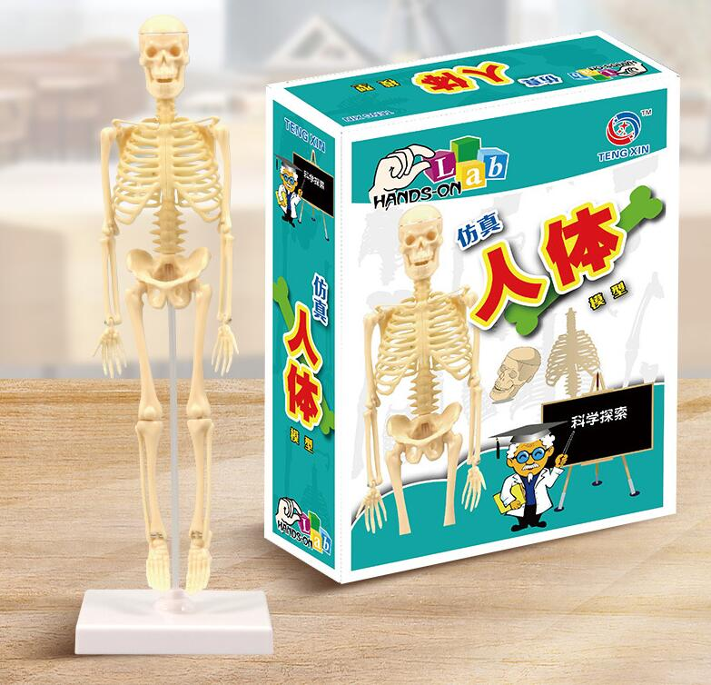 Human Skeleton Model Diy Assembly Model Scientific Experiment Toys Teaching AIDS