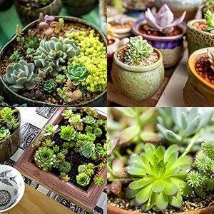 Image 5 - Confezione da 24 piante grasse artificiali pianta da giardino miniatura falso Cactus floreale fai da te casa succulente finte piante finte succulente finte