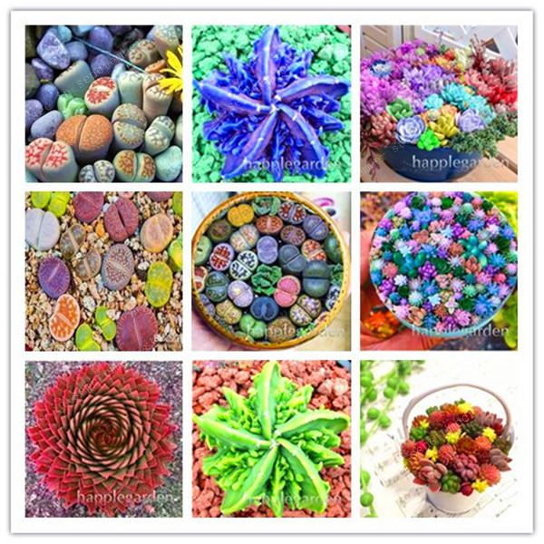 New 200Pcs Lithops Bonsai Rare Succulent Plants Ass Flower Lithops Pseudotruncatella Living Stone Bonsai Mini Garden Decor Plant