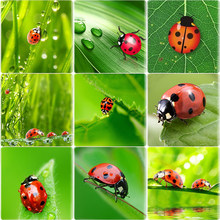 TAFREE Ladybugs Flowers Green Leaf Pattern 12/25 MM Square Shape Glass Cabochon Demo Flat Back Making Jewelry DIY Gift NT149(China)