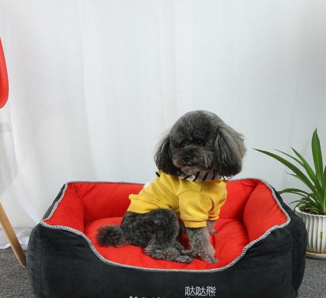 Тедди Собака Питомник человек мишки зима теплая искусственная