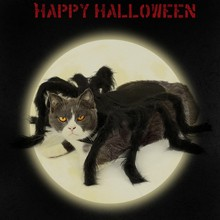 Halloween Pet Dog Clothes Spider Cosplay Pet Costume for Cat Dog Bat cosplay Dressing Up Clothes For Halloween Christmas Party pet cat dog nurse costume cosplay change clothes