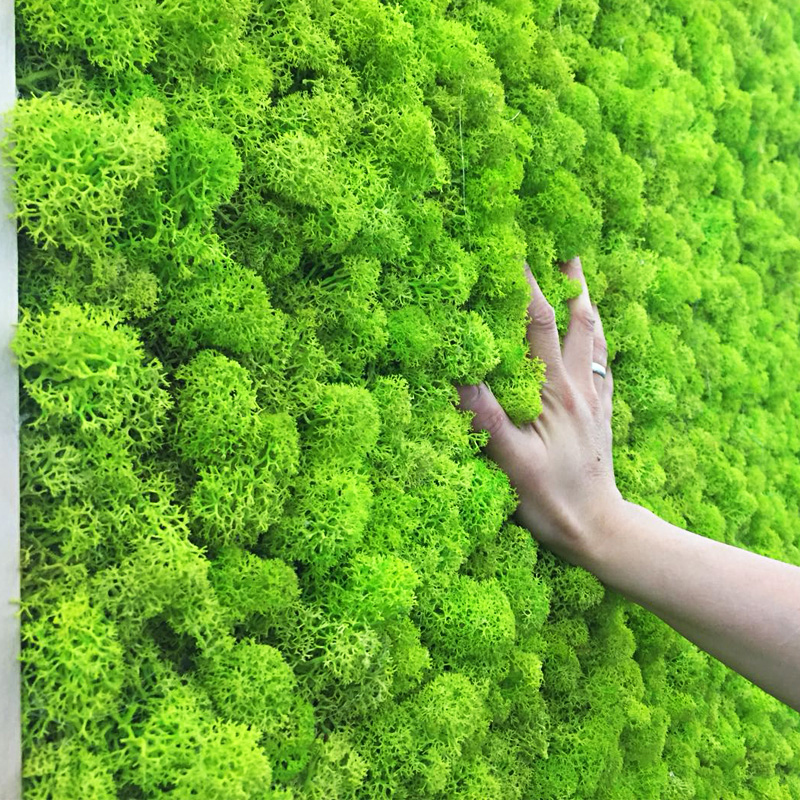 20/40g Natural High Quality Artificial Plant Moss DIY Home Wall Garden Ornament Micro Landscape Fake Flowers Decoration Material