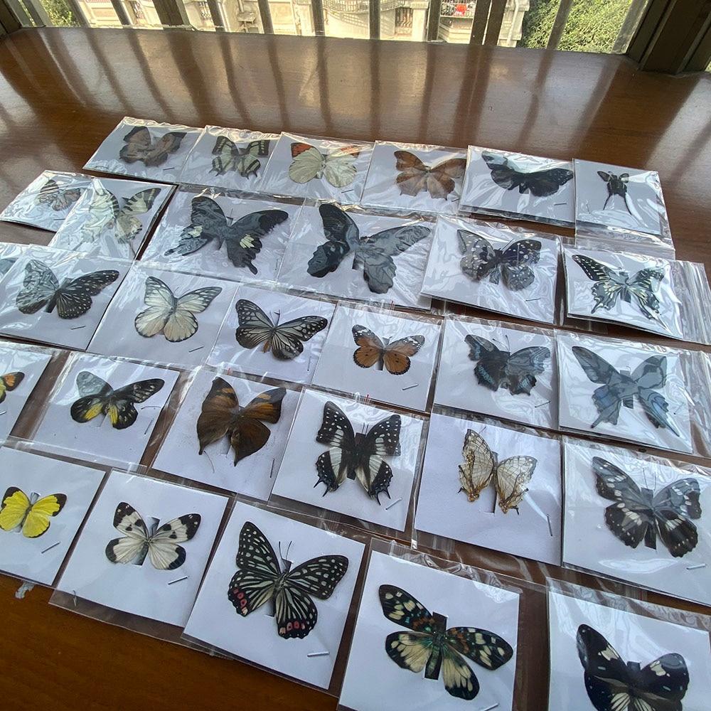 20 шт. натуральный разборный Rhopalocera / Le Butterfly/образец бабочки, декоративный материал|Статуэтки и миниатюры|   | АлиЭкспресс