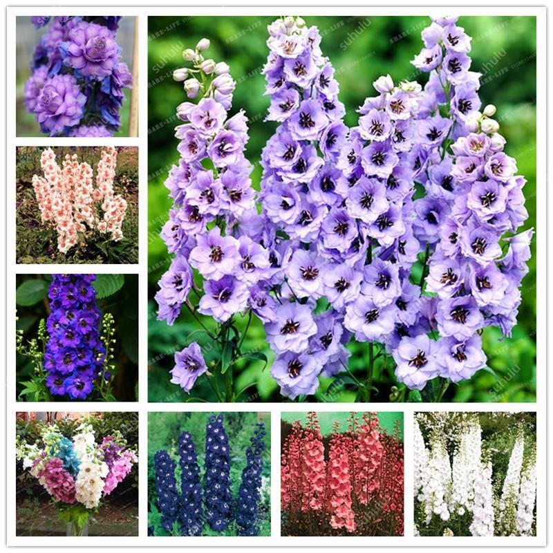 101 Pcs Colourful Delphinium Bonsai Japan Beautiful Plants Colorful Variety Chinese Charming Plant