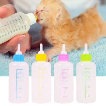 Kitten Feeding Bottle 1