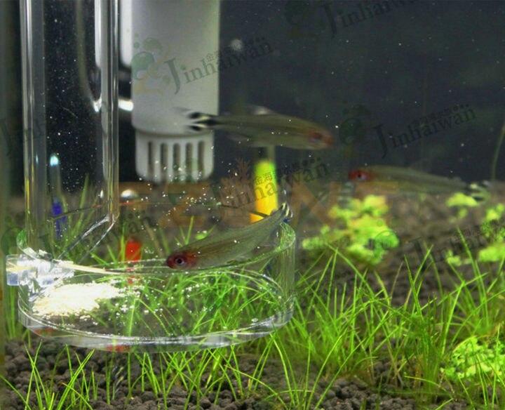 peixe tubo de alimentação com alimentador prato