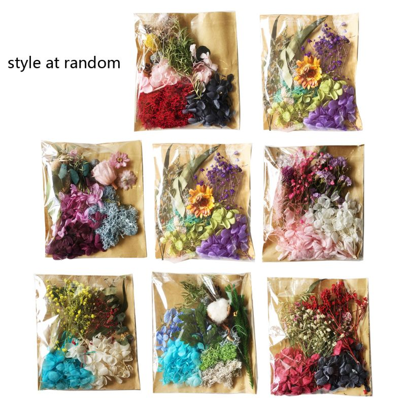 Real Pressed Flower Leaves Dried Daisy Flower Nail Art Resin Art Jewelry Making