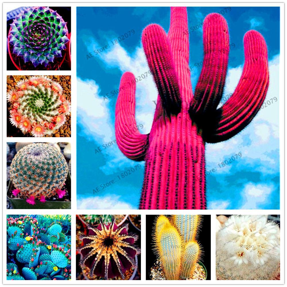 Plant Flower Bath Salts Mixture Of Cactus Essence 100Pcs XZZ-246