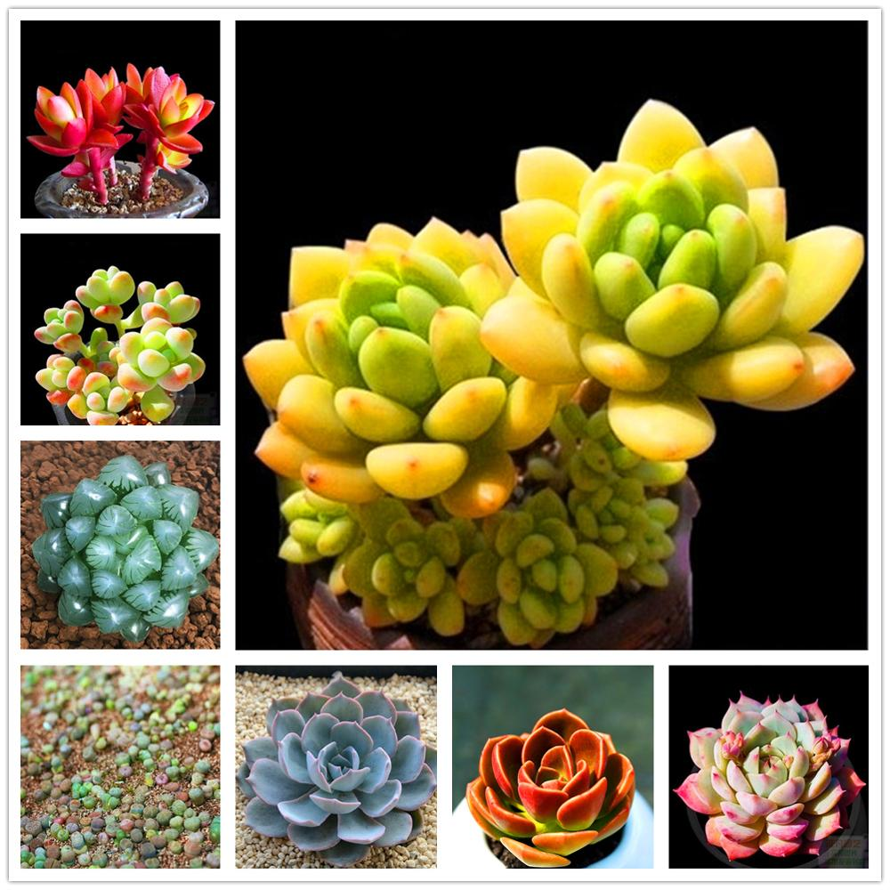 Plant Bath Salts Cute Succulents Flower Essence 100Pcs XZZ-157