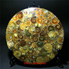 Natural Ammonite Disc Fossil Conch Specimen Healing +Stand 1pcs 4