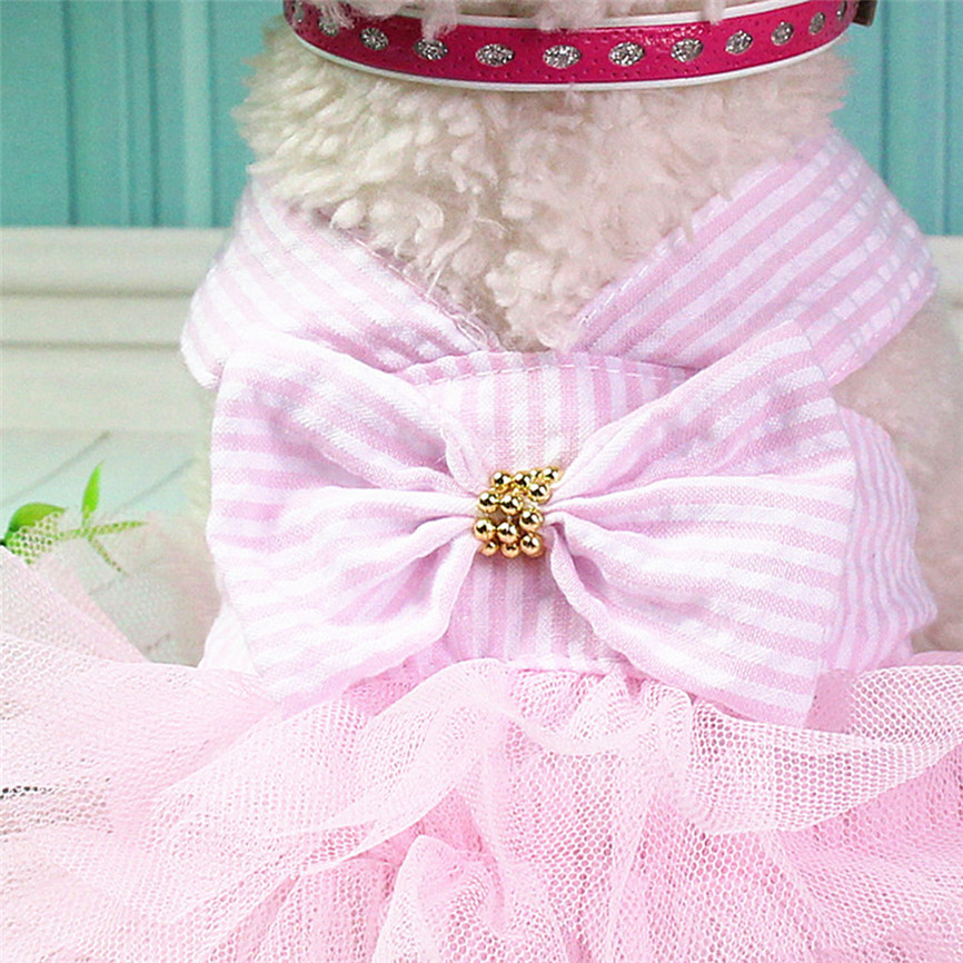 cute girl dog clothes