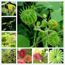 Plant Flowers Bath Salts Abutilon theophrasti Medicus Essence 100Pcs XZZ-106