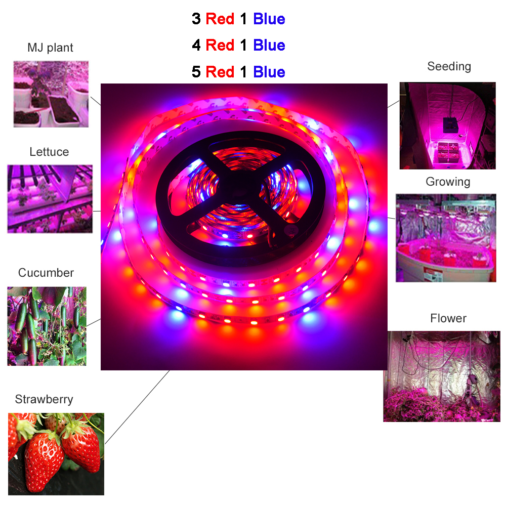 5M DC12V Plant Grow lights Full Spectrum <font><b>LED</b></font> <font><b>Strip</b></font> Light <font><b>300</b></font> <font><b>LEDs</b></font> <font><b>5050</b></font> Chip Red blue For Greenhouse Hydroponic plant image