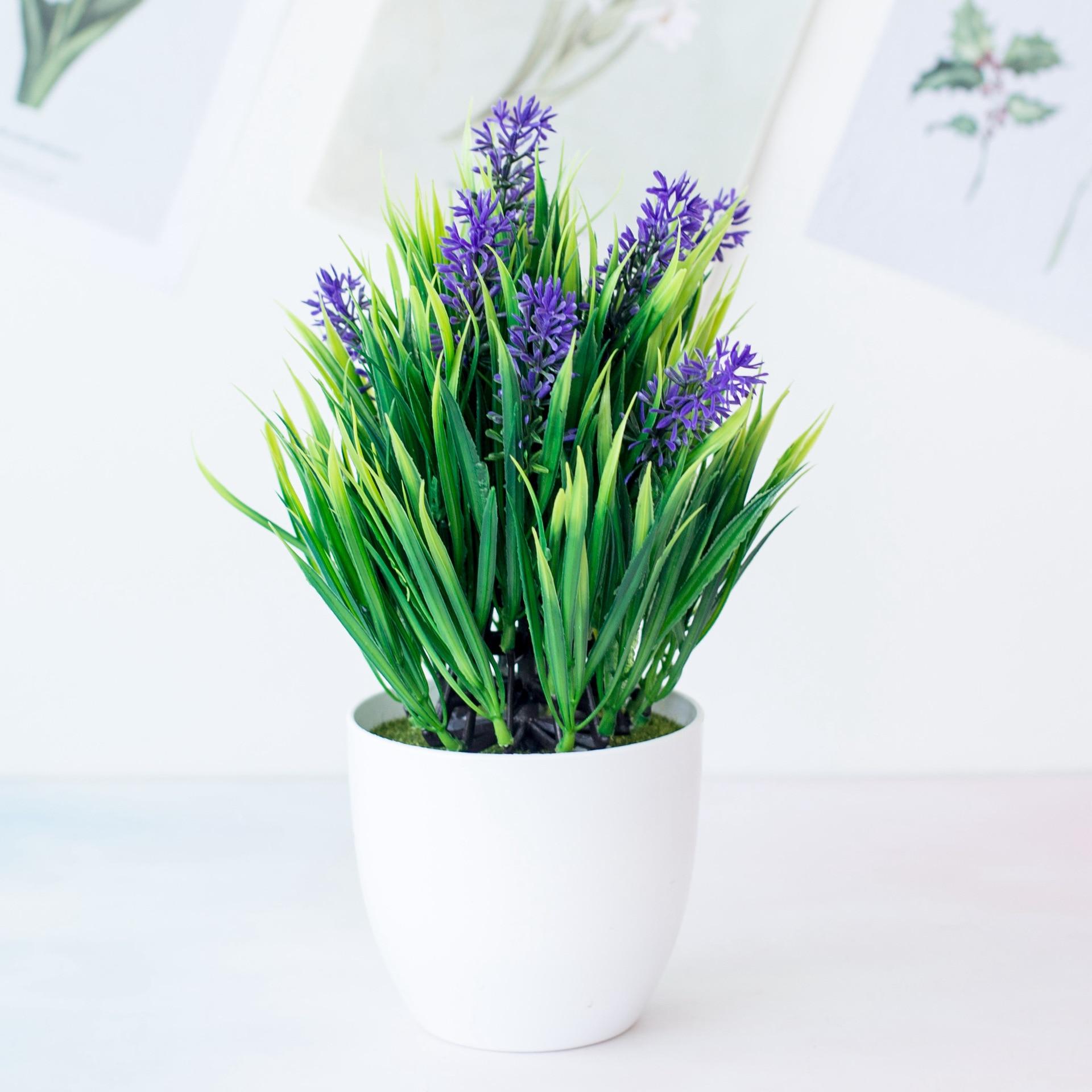 plantas real antimosquitos Caléndula 39