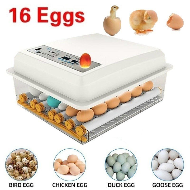 Dreamburgh Eggs Incubator 16 Eggs Automatie Incubatores With Turner For Hatching Goose Quail Chicken Eggs Egg Hatcher Machine