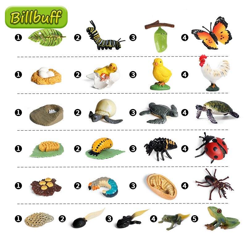 Новый цикл роста бабочек, пчела, божья коровка, паук, модели жизненного цикла, модель животного, фигурки, обучающий материал для детей