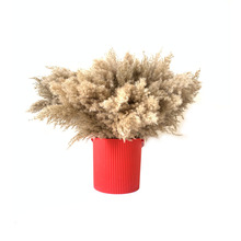 50pcs wedding flower bunch natural dried reed pampas Grass raw color 100pcs home decor phragmites communisg
