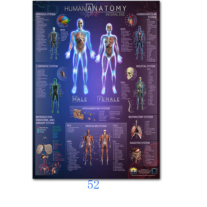 Human Anatomy Muscles System Art Poster Print Body Map Silk Wall Pictures For Medical Education Home Decor New