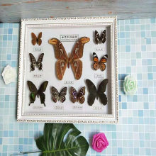 1 set of 9 pcs Real Specimen butterfly specimen photo frame craft gift home decoration decoration home decoration