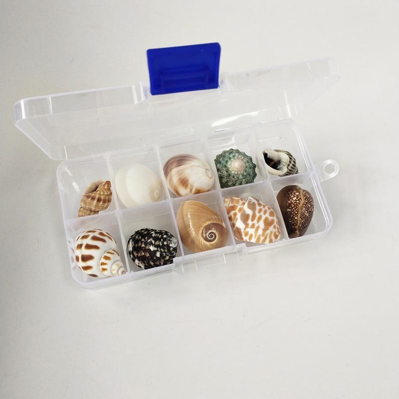Hot New 10Pcs/Box Natural Name  Conch Shells Big Conch Corn Screw Wall Decoration DIY Aquarium Landscape Seashells Crafts Party