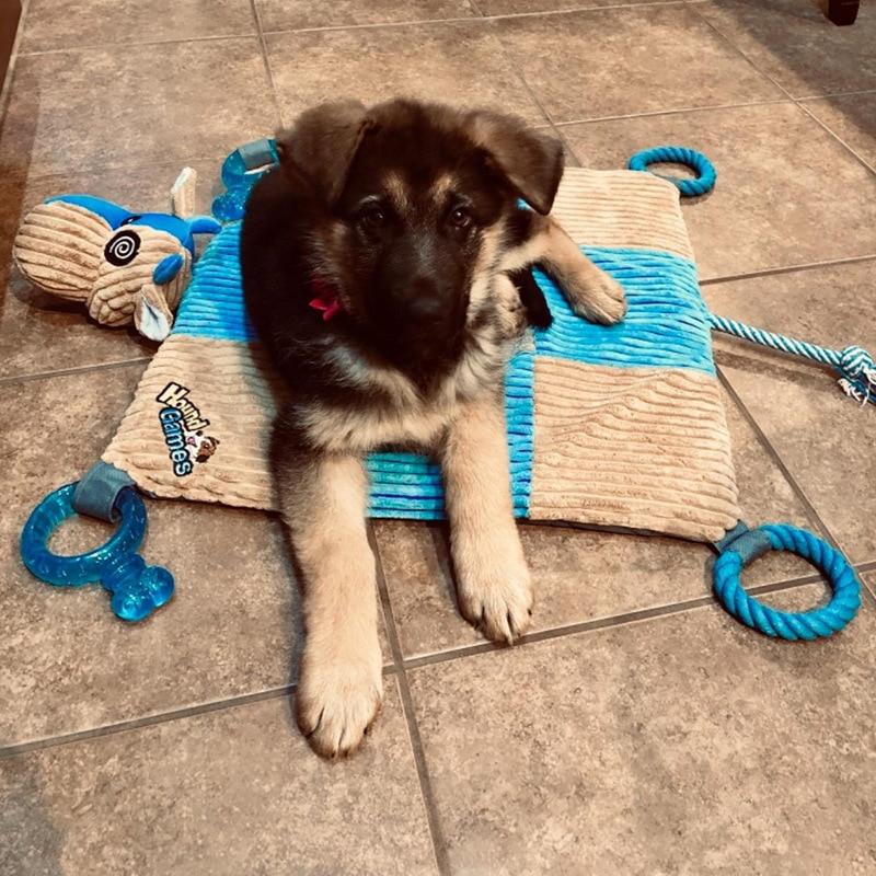 Tapis de chien de mode pour animaux de compagnie soulager le Stress jouets cordes de dentition qualité dentaire nez en peluche rembourré tapis jouets à mâcher - 2