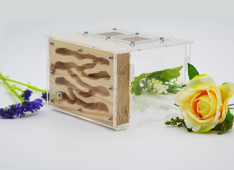 wooden ants nest ant farm made by real wood and acrylic ants house in Insect Supplies from Home Garden