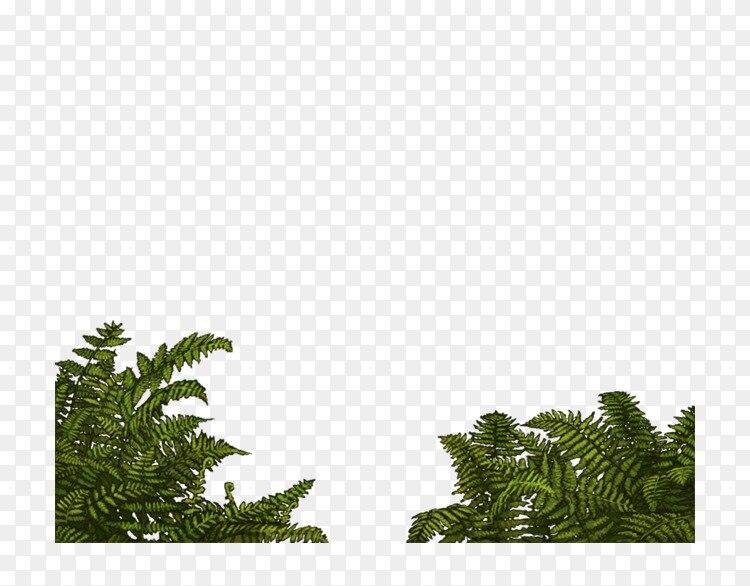 皮膚 科 松木