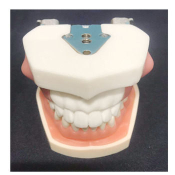 1 pcs Dental removable lump dental model dental tooth arrangement practice model with screw teaching simulation model 80x65mm